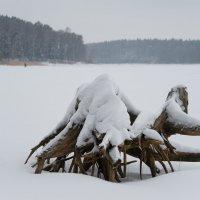 Местный абориген :: Андрей Куприянов