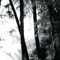 Был темен  лес, но так тянуло к  свету. :: Валерия  Полещикова