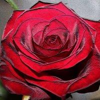 Пепел розы :: Нина Корешкова