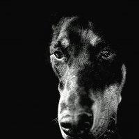 портрет :: Олег Семенов