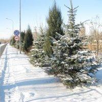 Первый снег :: анатолий томас