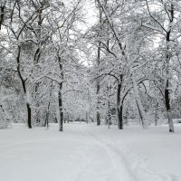 В заснеженном парке :: Сергей Тарабара