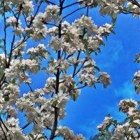 Было много цветов и много яблок :: Фотогруппа Весна.