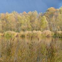 Осень :: Валентина Данилова