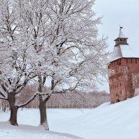 Зимние дубы :: Евгений Никифоров