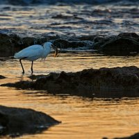 ловец золотых рыбок... :: Павел Баз