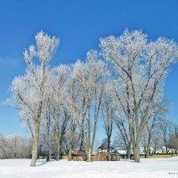 Зима :: Андрей Буховецкий