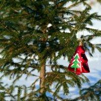 В лесу родилась ёлочка.. :: Андрей Заломленков