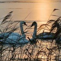 В лучах осеннего заката :: Liliya Kharlamova
