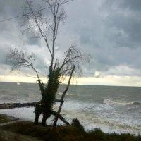 шторм на Черном море :: Антонина Владимировна Завальнюк
