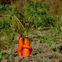 Любовь-морковь)) :: Наталия