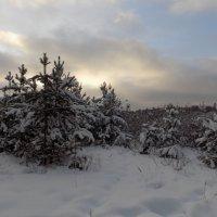Грустное небо декабря :: Алена
