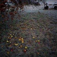 11/12/16 дневные сумерки (2) :: Юрий Бондер