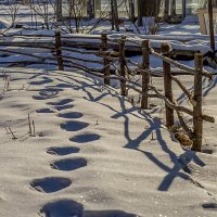 Зима , блин ! На даче видели медведя ! :: Евгений Ананевский