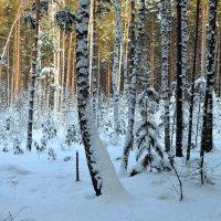 Волшебный лес :: Вера Андреева