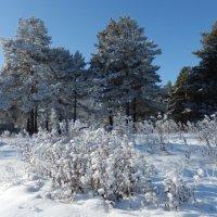 Морозным днём :: Владимир Звягин