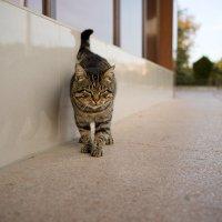 Санаторский худенький котик :: Иваннович *