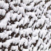Snowy fence :: Олег Шендерюк