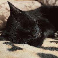 Cat :: Кристина Кеннетт