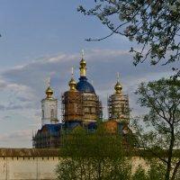 Купола Свенского монастыря :: Александр Березуцкий (nevant60)