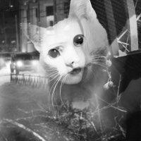 Женщина-кошка :: Елена Бушуева