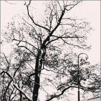 Дерево :: Galina Belugina