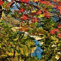 Цветная осень :: Сергей Чиняев