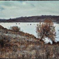 Холодный дождь неслышно моросит... :: Ирина Falcone