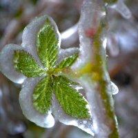 Зеленый леденец :: Nina Streapan