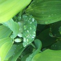 после дождя :: Мари B