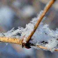 Снежинки :: Татьяна Ракутина