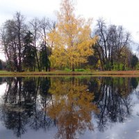 Осеннее дерево. :: Алексей Цветков