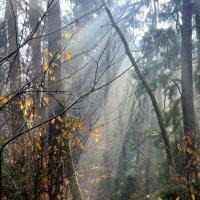 солнце в лесу 1 :: Сергей Короленко