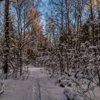 Зимний лес :: Андрей Дворников