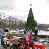 Молодой Дед Мороз :: татьяна петракова