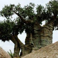 деревья и вечность :: elena manas