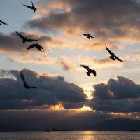 море утром 3 :: Игорь Гарагуля