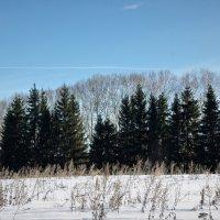 Зимнее воинство :: Валерий Талашов