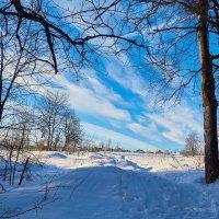 Зимняя прогулка :: Ард Прохоров