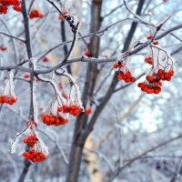 Немного зимнего пейзажа)) :: Кристина Милославская