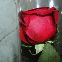 Одинокая роза . :: Мила Бовкун