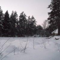 У лесной опушки :: Svetlana Lyaxovich