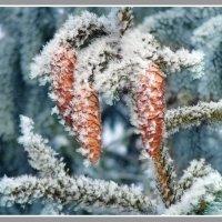 зимняя :: павел бритшев