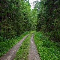 Лесная дорога. :: Николай