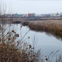 замерзающий пруд :: Александр Прокудин