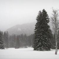 Зима :: Юрий Кольцов