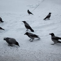 Зимние птицы :: Aнна Зарубина