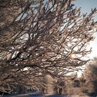 Морозный свет.. :: Андрей Заломленков