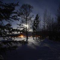 Выйдя из леса в лунную ночь :: Сергей Шаврин