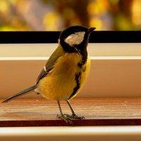 бесстрашная :: linnud